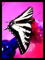 Swallowtail 4 by XSomethingWickedX