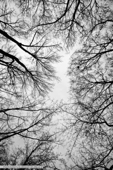 The Roots of the Sky by tamauz