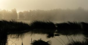morning panorama I by indojo