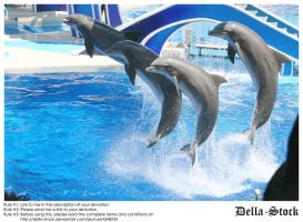 Sea World: Dolphin.3 by Della-Stock