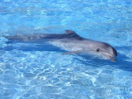Lovely dolphin by ClauDia18