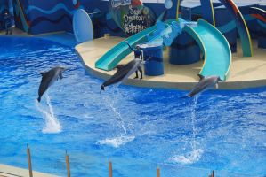 Dolphins. by hahli9