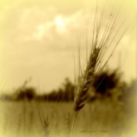 August is ocher-sepia 11 by martaraff