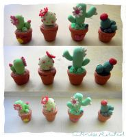 Cacti by Cutenessrelated