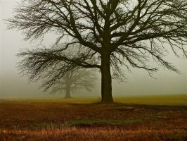 Family of Oaks by dendrology