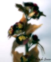 Flowers by anadesousa