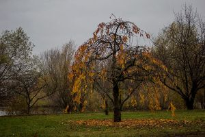 12-11 autumn tree by evionn
