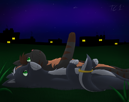 .:Watching the Sky:. by slycooper998