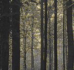 Golden woods (animated) by ansdesign