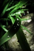 Drops on a Blade of Grass by BMelzer