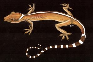 White-lined Gecko by Raptor85