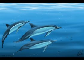 Dolphin Trio by Oracle88