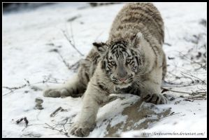 On the prowl by AF--Photography