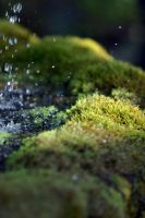 Mossy Fountain by robertcottrell