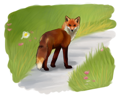 Red Fox on Path by thefireflii