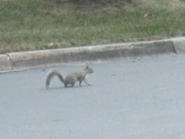 Squirrel 2 by moulinrougegirl77