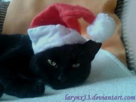 Christmas Cat by Larynx13