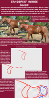 Horse Drawing Guide by sandeyes13