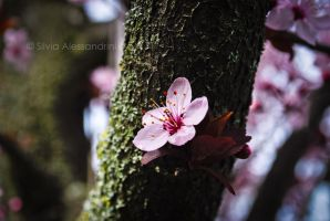 Spring again IV by SilvieTepes
