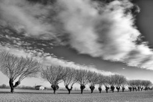 Winter Trees ... by MarioDellagiovanna
