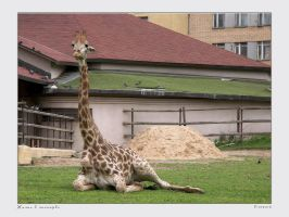 Life in Zoo 19 by firework