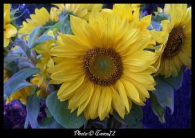 Flower 38 by Twins72
