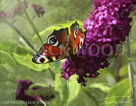 Peacock Butterfly by Jack-Wood