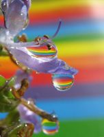 Rainbow Hanging Bells by Piombo