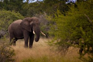 Elly The Elephant by gmwebs