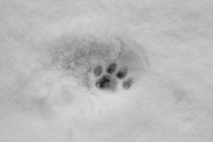 Footprints in the snow. by AniekPhotography
