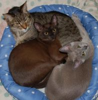 All of my cats having a nap! :) by BelugaLu