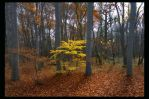 Last autumn leaves 3 by manroms