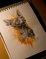 Tattooed sphynx cat by RykA44