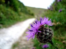 Thistle 2 by Druidstone