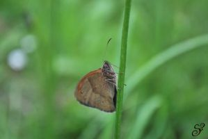 Butterfly #0069 by Shayele82