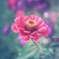 Zinnia by Alyss6