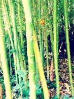 Bamboo by Chocolatewaffles659