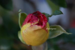 two colors by EllieGomes