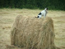 Megan On A Haybale by bagnaj97