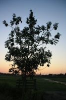 12-07-26 The Tree by Herdervriend