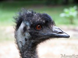 Hairy emu by Momotte2