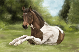 A foal by BlackReason