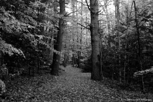 Into the Woods by jltrafton