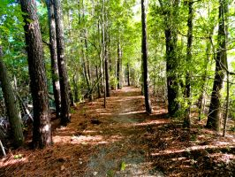 Wooded Path stock by stormymay888