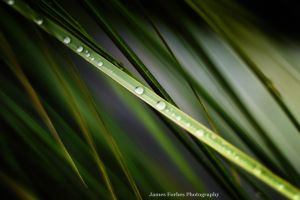 Dew Leaf 02 by JForbes1701
