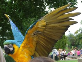 .Macaw wings 4. 1133 by DelinquentDog