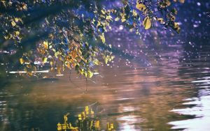.: Indian Summer :. by Frank-Beer