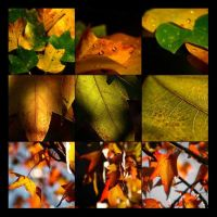 color melting of autumn by piink-chamallow