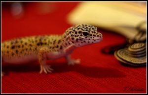Leopard Gecko by vear6