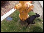 Some Days You're the Hydrant, Some Days the Dog by FreeMeadows